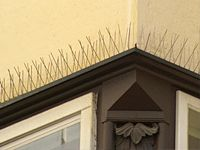 Bird Pigeon Spikes