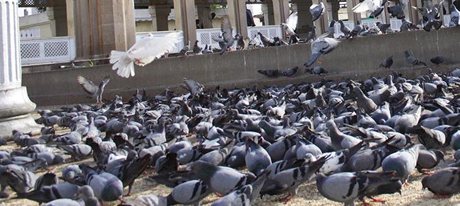 bird-control-information