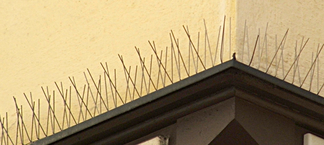 Pigeon Proofing - Bird Spike Installation From Total Bird Control