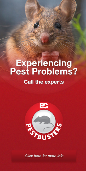 pestbusters-ad