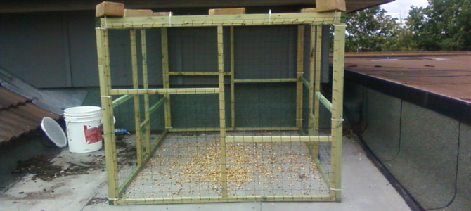 Bird and Pigeon Trapping Cage