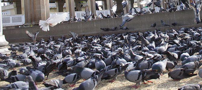 A Guide to Bird Control