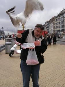 seagull-herring-gull1