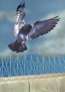 pigeon spikes, pigeon deterent