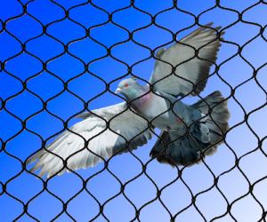 pigeon-netting
