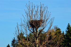 Is it illegal to move a bird's nest?