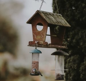 How to attract birds to your garden – but deter pests