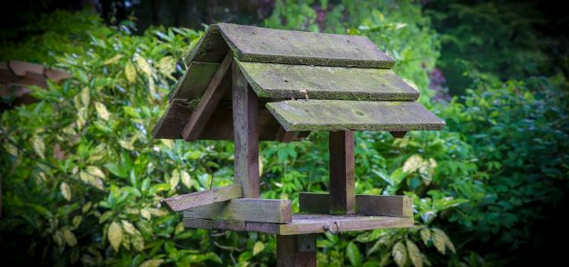 Will a Bird Table attract pests?