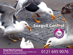 Seagull Control UK
