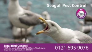 Seagull Pest Control UK