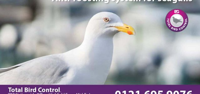 anti-roosting system for seagulls