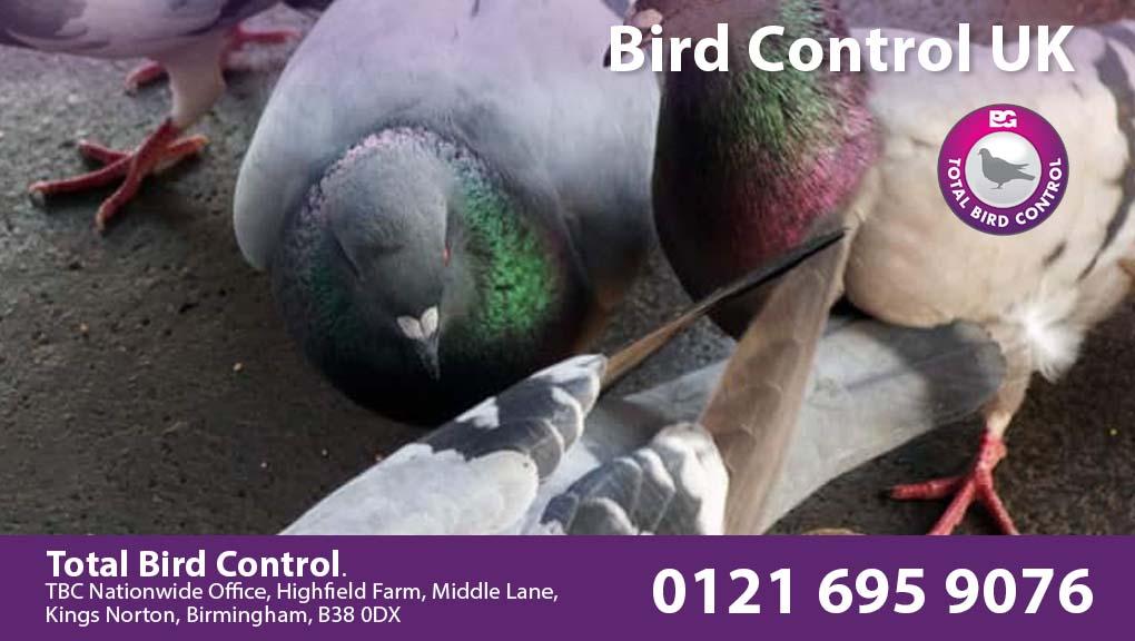 Bird Control UK