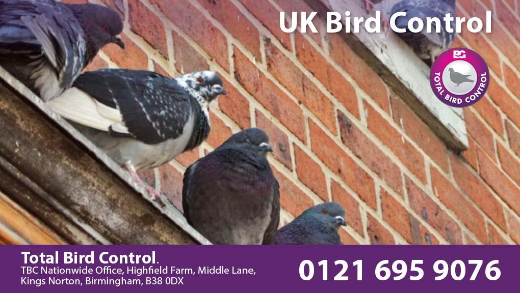 UK Bird Control