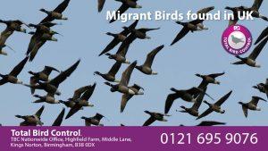 Migrant Birds found in UK