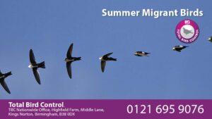 Summer migrant birds