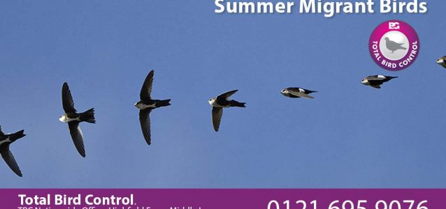 Summer migrant birds