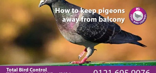 how to keep pigeons away from balcony