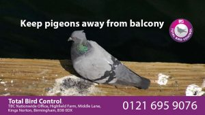 keep pigeons away from balcony uk