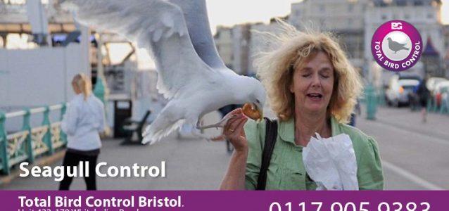seagull control bristol